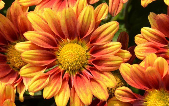 Blumen im Herbst